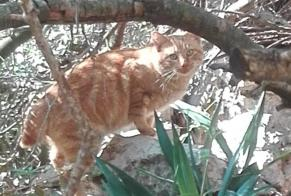 Discovery alert Cat Male Pedreguer Spain